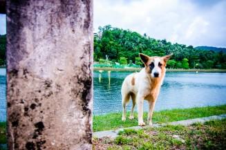 Собака и столб
