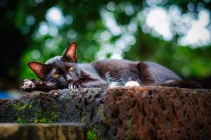 Doi Ngam Muang Black Kittie Sleeping (Wat Doi Ngam Muang и котики.)