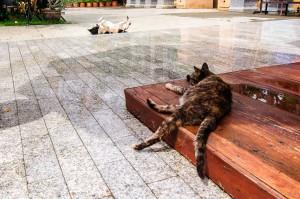 Doi Ngam Muang Cat And Dog (Wat Doi Ngam Muang и котики.)