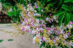 Flowers In Wat Maha That Ayuthaya Thailand (Wat Maha That, Айютайя, Таиланд.)