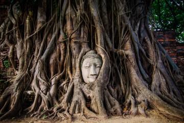 Лицо Будды в корнях дерева, Айютайя, Таиланд