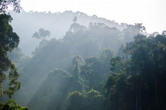 Утренняя дымка над джунглями.