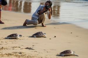 20 Th Annual Turtle Release 08 (20-й ежегодный выпуск морских черепах в море.)