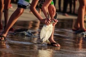 20 Th Annual Turtle Release 37 (20-й ежегодный выпуск морских черепах в море.)