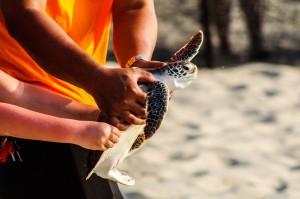 20 Th Annual Turtle Release 45 (20-й ежегодный выпуск морских черепах в море.)