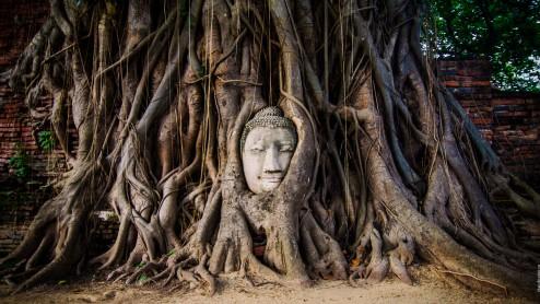 Лик Будды в корнях дерева, Айютайя.