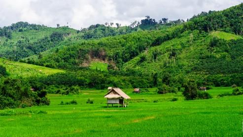 Поля Лаоса