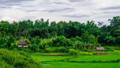 Рисовые поля Лаоса