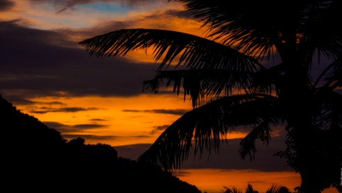 Закат на Пхи-Пхи. Силуэт пальмы на фоне заката.