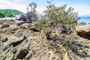 Мыс и деревья (Остров Ко Яо Ной)