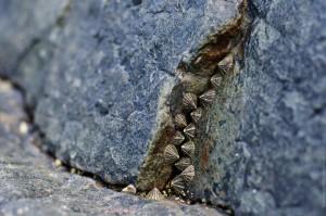 Ракушки в расщелине (Остров Ко Яо Ной)
