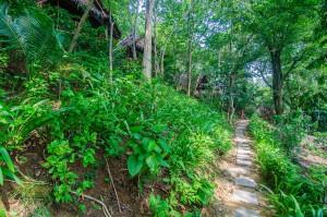 Дорожка вдоль домиков через джунгли (Поездка на Пхи-Пхи Дон.)